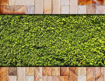 Stone brick wall and green leaf Royalty Free Stock Photography