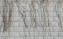 A STONE BRICK WALL. TEXTURES OF A STONE BRICK WALL WITH SOME DRIED CIRRUS AS BACKGROUND Royalty Free Stock Image