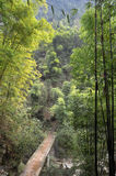 Stone bridge in bamboo forest Royalty Free Stock Image