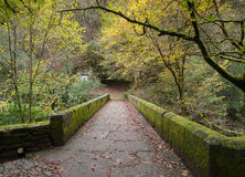 Stone bridge in the forest Stock Image