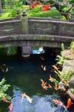 Stone bridge in Japanese garden over koi carp pond stock images