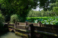 Stone bridge in lotus pond on sunny summer day Royalty Free Stock Photography