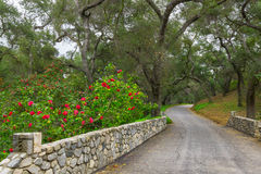 Stone Bridge and Path Lined with Camellia in Live Oak Forest Stock Photography