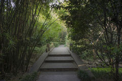 Stone bridge under bamboo grove Stock Photo