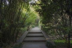 Stone bridge under bamboo grove Stock Photo