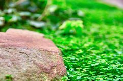 Stone in bright green grass, selective focus, blurred background. Copy space. stock photography