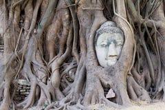 Stone budda head. Covered by the tree roots at Wat Mahathat, Ayutthaya, Thailand Stock Photography