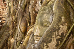 Stone Buddha Head. Buddha head carving in tree roots at the temple of WatMahatat in Ayutthaya province , Bangkok, Thailand stock image