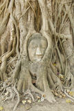 Stone buddha head in the tree roots, Stock Photos