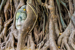 Stone buddha head in the tree roots, Ayutthaya is old capital of Stock Photo
