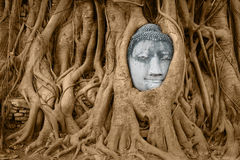 Stone Buddha head in tree roots Stock Photography