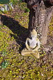 Stone buddha meditation in front of a cherry tree Stock Photos