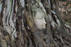 Stone Buddha's head entwined in tree roots. At Wat Maha That (Temple of the Great Relics), Ayutthaya, Thailand Stock Images