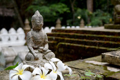 Stone Buddha statue  with moss and Frangipani flowers Royalty Free Stock Images