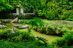 Stone buffaloes in creek of verdant summer Stock Images