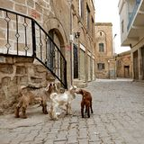 Stone buildings of Mardin old town in Turkey. Stock Photo