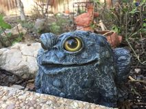 Stone Bullfrog in the Garden Royalty Free Stock Photos