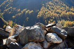 Stone cairn in Alps, France Royalty Free Stock Image