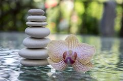 Stone cairn on green blurry background, light pebbles and stones, orchid blooming flower Stock Image