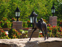 Stone camel in garden. Black stone camel in a decorated garden with plants and flowers Stock Photo