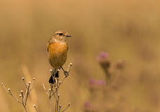 Stone chat Royalty Free Stock Images