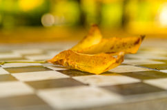 Stone chessboard in the park Royalty Free Stock Image