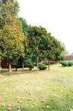 Stone City Park Royalty Free Stock Photo