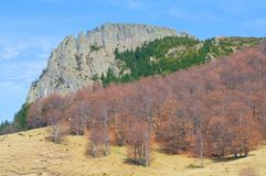 Stone cliff with brown forest Stock Photo