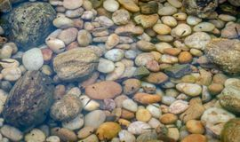 Stone colorful pebble under water with small fish stock photos