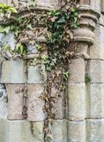 Stone columns covered with ivy. In Scotland castle Stock Photography