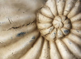 Stone conches of close-up Stock Photos