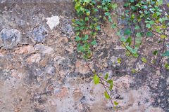 Stone or concrete abstract background wall Stock Images