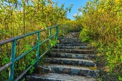 Stone concrete stairway in Tithonia diversifolia field Royalty Free Stock Photos