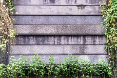 Stone concrete wall surround by plant background. Stone concrete wall surround by plant for background Royalty Free Stock Images