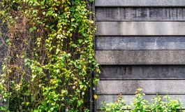 Stone concrete wall surround by plant background. Stone concrete wall surround by plant for background Royalty Free Stock Photos