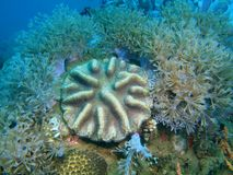 Stone coral Stock Image