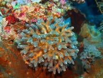 Stone coral Stock Photo