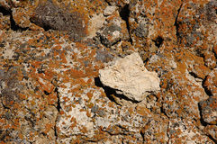 Stone covered colored lichen Royalty Free Stock Photo