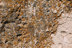 Stone covered lichen Stock Photos