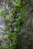 Stone covered with moss and green plants Royalty Free Stock Images