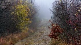 Foggy path. A stone covered path that leads to an interesting pine forest near my town - Montana Royalty Free Stock Photos
