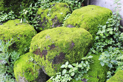 Stone Covered With Moss