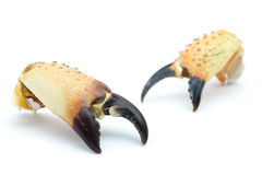 Stone crab claw. Pair of stone crab claw isolated on white background stock image