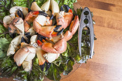 Stone Crab Claws on a Bed of Red Lettuce #1 Stock Photos