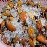 Stone crab claws on ice in Thailand market Royalty Free Stock Images