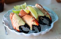 Stone Crab claws premium seafood cuisine in south Florida USA. Tasty food in USA royalty free stock images