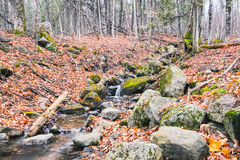 Stone creek in the woods. Running water in the creek in the forest with yellow and red leaves Royalty Free Stock Photography