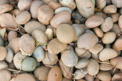 Stone decorate in garden with Sliver Stock Photography