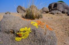 Stone  in dersert Stock Images