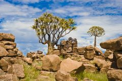 Stone Desert Giants Playground and Quiver Trees, Namibia. Stone desert Giants Playground in Namibia near Keetmanshoop with quiver trees  - aloe dichotoma Royalty Free Stock Photo